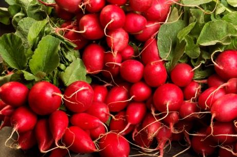 fresh-radishes
