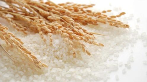 rice-625_625x350_71426749881
